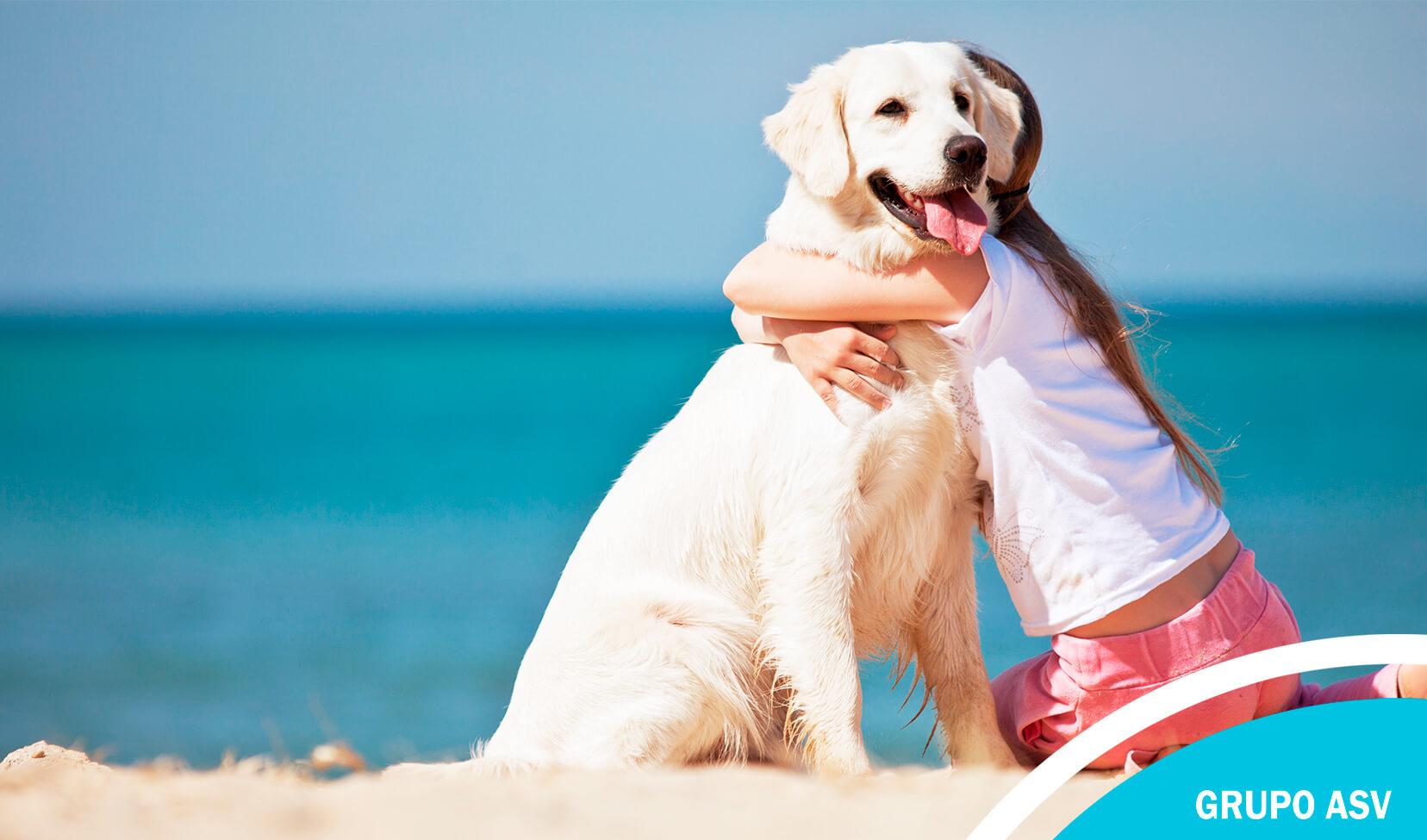 Cómo superar la muerte de un perro